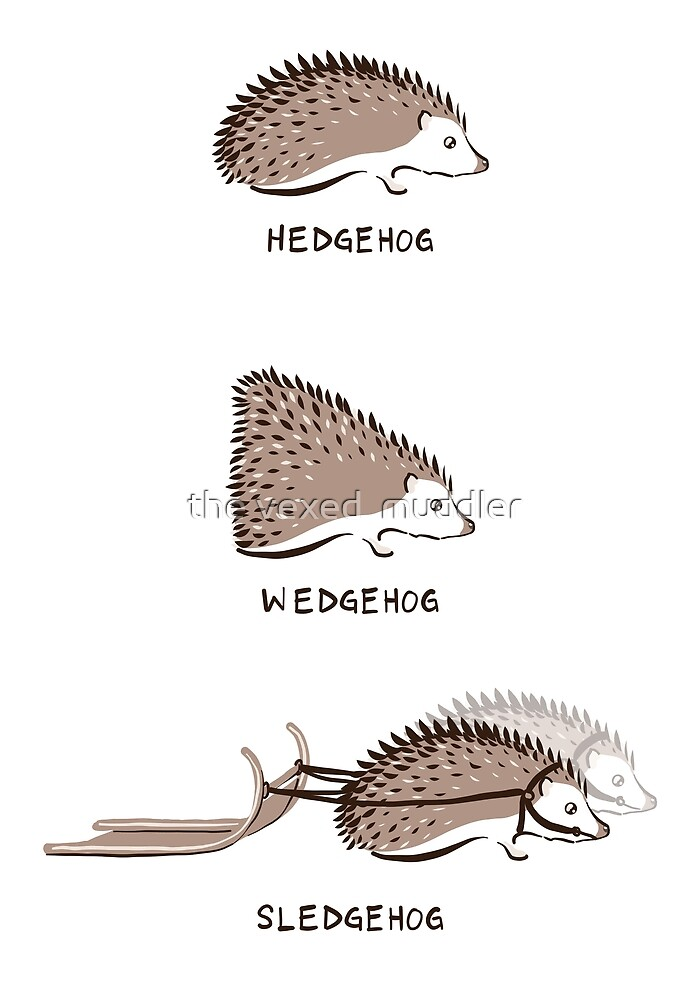 Hedgehogs and their relatives by the vexed  muddler
