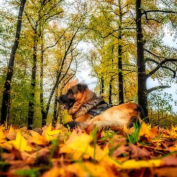 Axel among autumnal leaves by birba