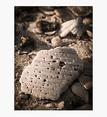 Sea Shells and Sand Photographic Print
