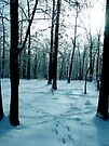 Blue Lonely Winter by NatureGreeting Cards ©ccwri