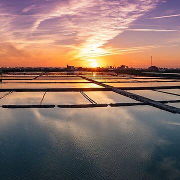 Salt flats of Aveiro at sunset by homydesign
