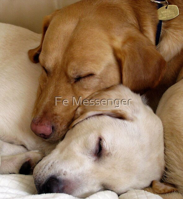 Let Sleeping Dogs Lie by Fe Messenger