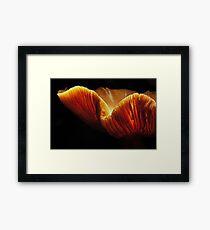 Chanterelle Framed Print