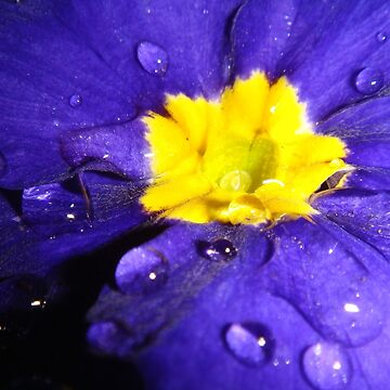 Blue drops by Eugenio