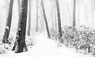 First Snow by Mieke Boynton