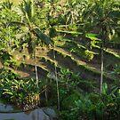 Bali Tegallalang Rice Terrace Ubud by Bobby McLeod
