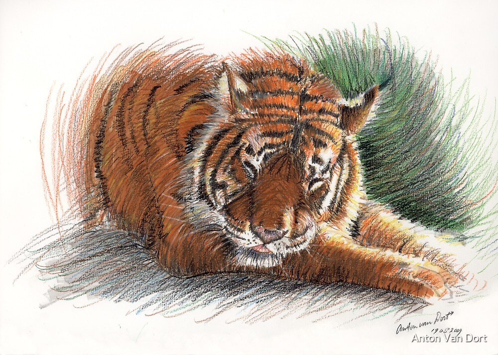 Sleeping Tiger by Anton Van Dort