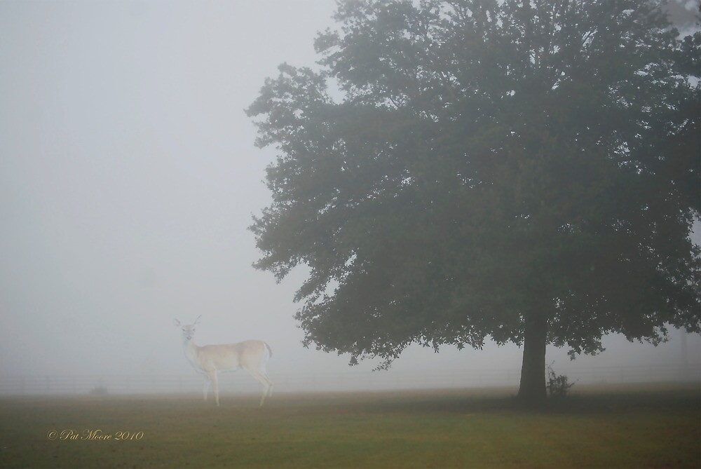 Foggy Country Morning by Pat Moore