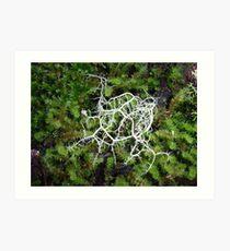 Lichen world of Lobster Falls, Tasmania Art Print