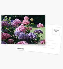 Hydrangea - The Gorge Launceston Postcards
