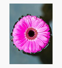 Flower on a Still Pond Photographic Print
