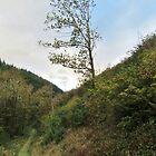 Woodland Walk by lezvee