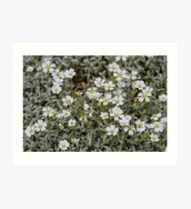 Clusters of Flowers in the Bush Art Print