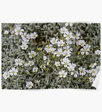 Clusters of Flowers in the Bush Poster