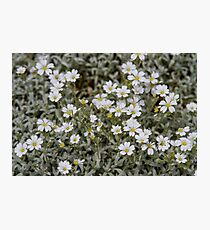 Clusters of Flowers in the Bush Photographic Print