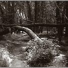 Arch on Wooded Path, Langdon Park Plymouth by Wayne King