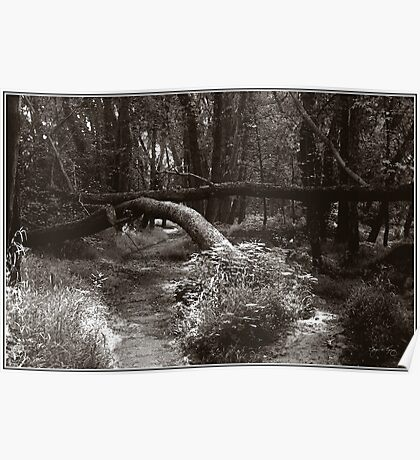 Arch on Wooded Path, Langdon Park Plymouth Poster