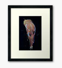 WDVMM - 0495 - Old Year Framed Print