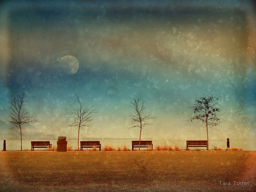 The Benches by the Moon by Tara  Turner