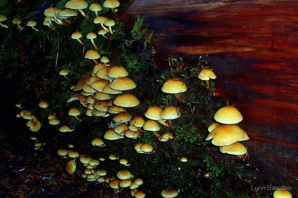 """Mushrooms Galore"" by Lynn Bawden"