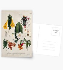 Five flowering plants, all species of the genus Bignonia. Coloured lithograph. Postcards