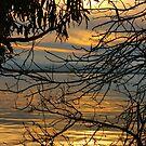Golden Sunset  by Barbara  Brown