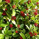 Red Autumn Berries....................Most Products by Fara