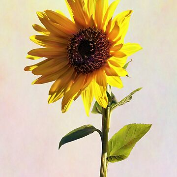 Sunflower Enjoying the Sun by SudaP0408