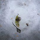 Birdbath by Lynn Wiles