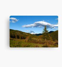 Wild coniferous  Canvas Print