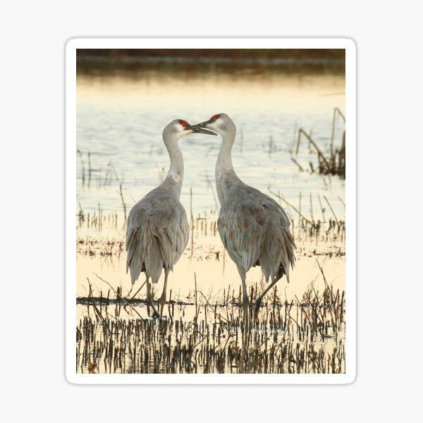 Sandhill Crane pair Sticker