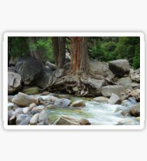 Roots in the Merced River Sticker