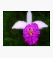 February Orquid - Orchid Photographic Print