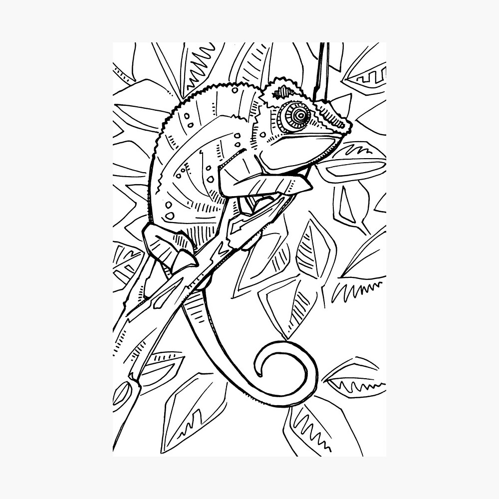 Panther chameleon, coloring book page | Photographic Print