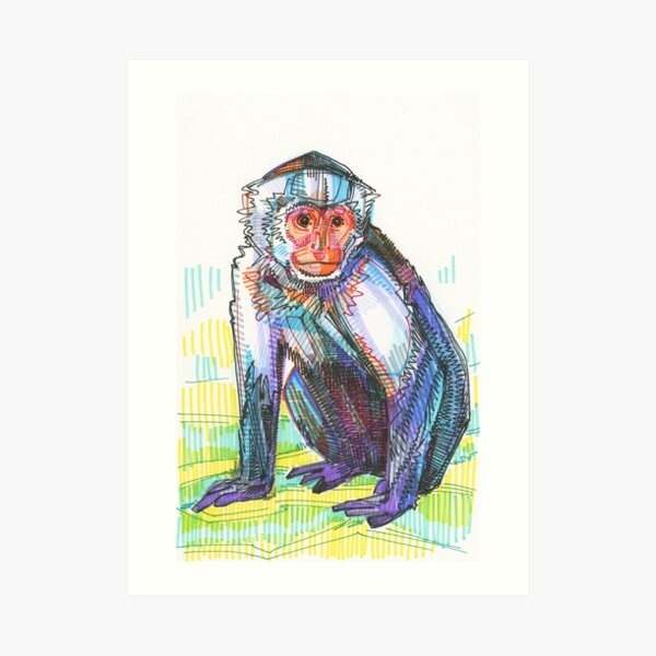 Capucin Monkey Drawing - 2015 Art Print