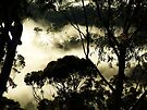 'Birds -eye View' by debsphotos