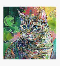 Katzenmalerei - 2011 Fotodruck
