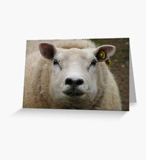 East Yorkshire Sheep Greeting Card
