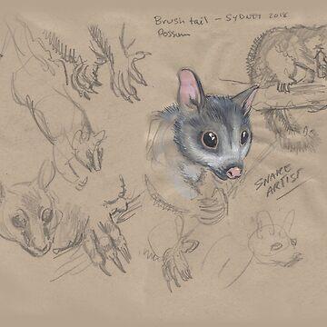 Brush Tailed Possum by SnakeArtist