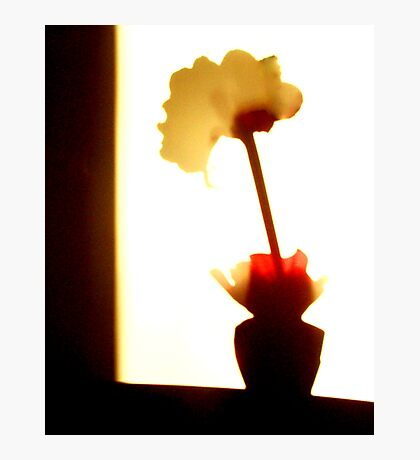 Shadow Flower Photographic Print