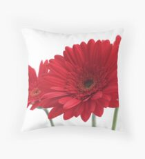 three red gerberas on white background Throw Pillow