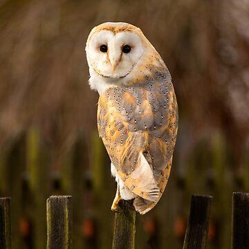 Barn Owl by Femaleform