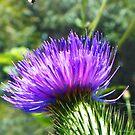 Mmmm, Purple by PhoenixArt