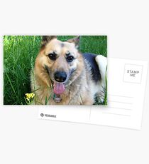 Happy Dog Postcards