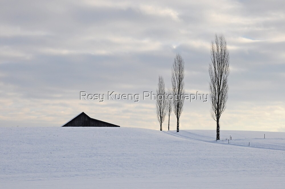 Three'n half Trees by Rosy Kueng Photography