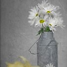 Daisy Duckling by Maria Dryfhout