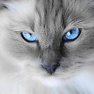 Baby Blue by Mark van den Hoek