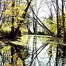 Mellow Reflections by NatureGreeting Cards ©ccwri