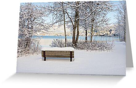 Snowy Bench by Tracy Riddell