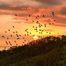 Parrot-Filled Skies at Sunset by Tracy Riddell